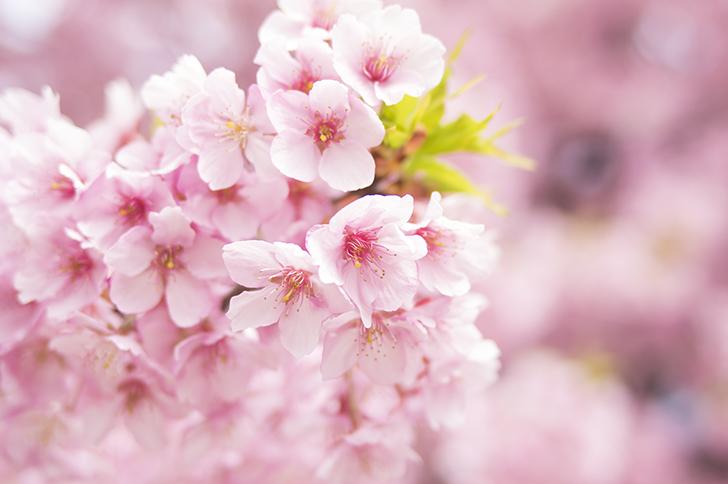 『春恋祭り』開催!(2/15~3/24)