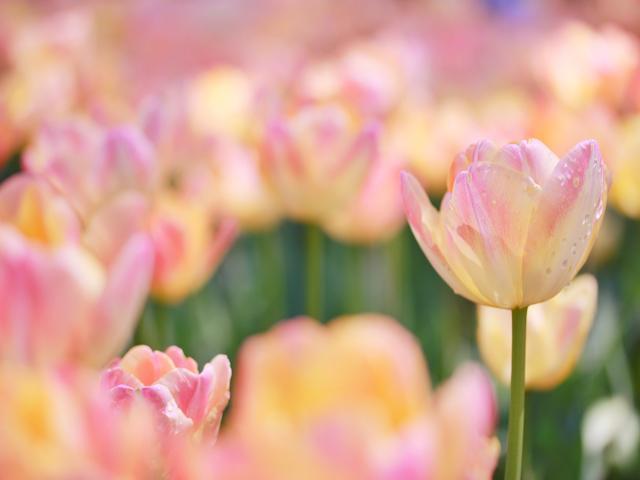加賀屋『春恋祭り』開催!館内を満喫するプランをご紹介♪~第一弾~(3/1~3/31)